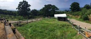 The paddock, ready for its new inhabitants.